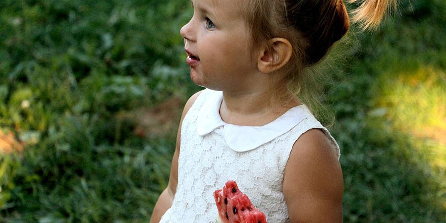 plaga moscas de la fruta