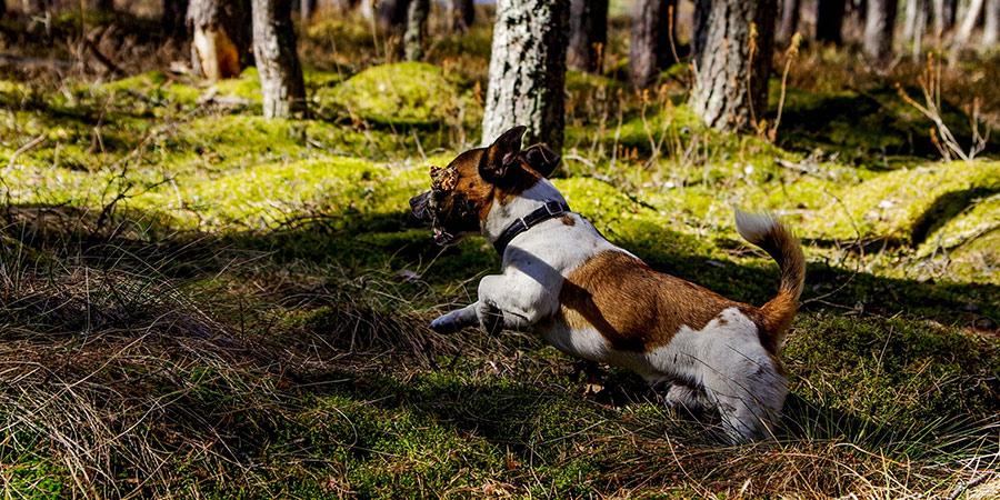 collar Repelente de mosquitos para perros